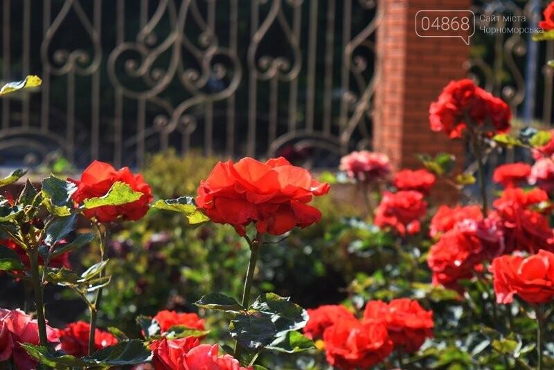 Черноморск – город роз (фоторепортаж), фото-12