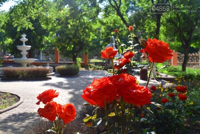 Черноморск – город роз (фоторепортаж), фото-7