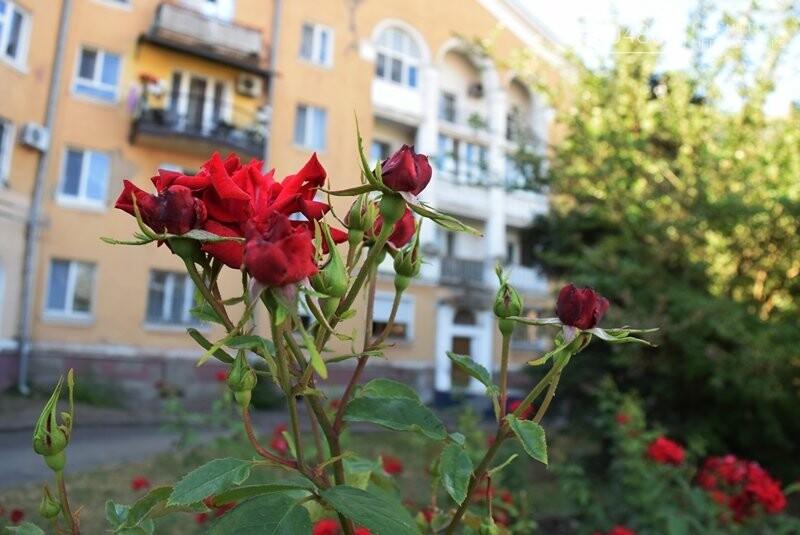 Черноморск – город роз (фоторепортаж), фото-8