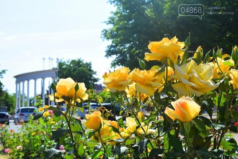 Черноморск – город роз (фоторепортаж), фото-3