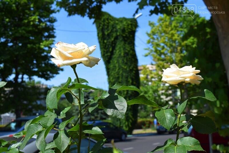 Черноморск – город роз (фоторепортаж), фото-9