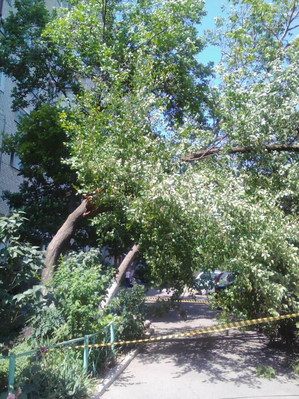 В Черноморске упало 10-ти метровое дерево, фото-2