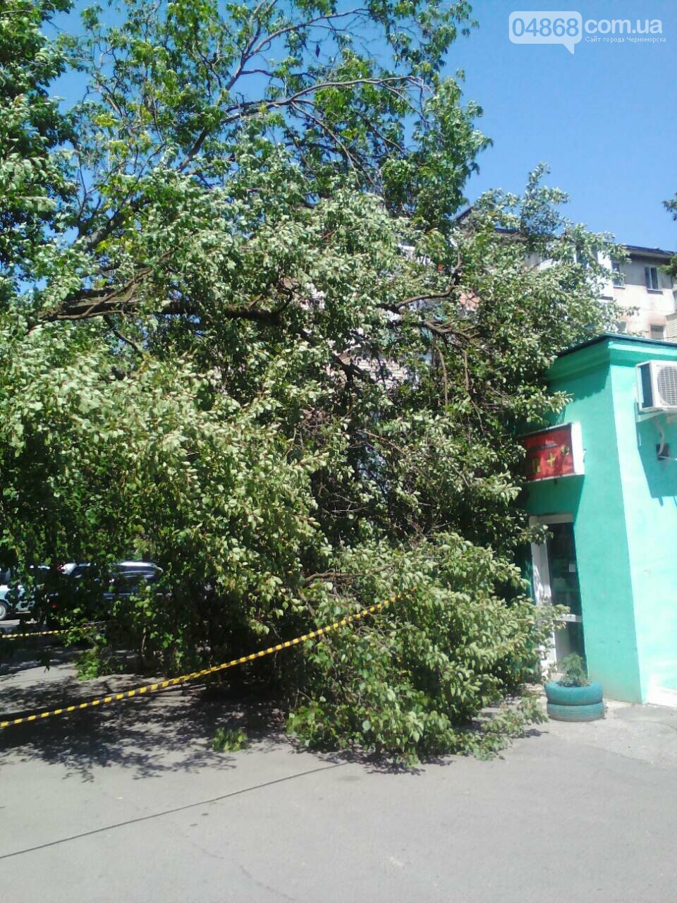 В Черноморске упало 10-ти метровое дерево, фото-1