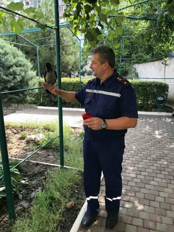 Новости нашего городка: в спасательной службе Черноморска появился новый сотрудник – ворон, фото-5