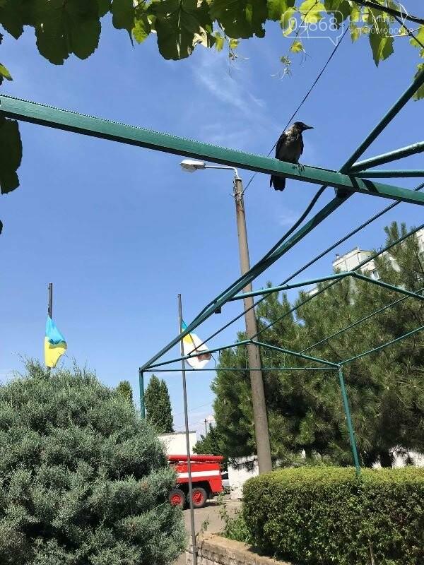 Новости нашего городка: в спасательной службе Черноморска появился новый сотрудник – ворон, фото-6