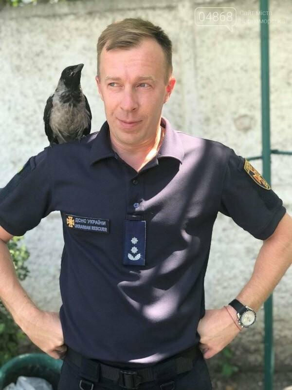 Новости нашего городка: в спасательной службе Черноморска появился новый сотрудник – ворон, фото-2
