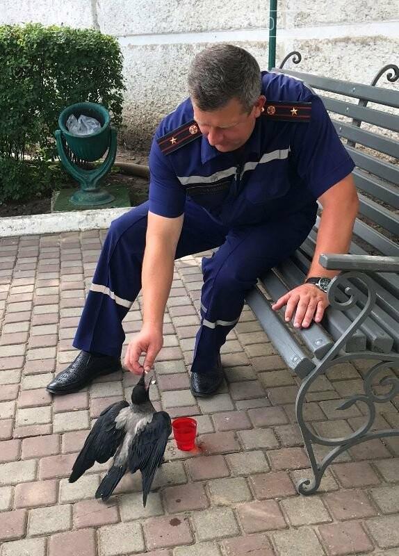Новости нашего городка: в спасательной службе Черноморска появился новый сотрудник – ворон, фото-3