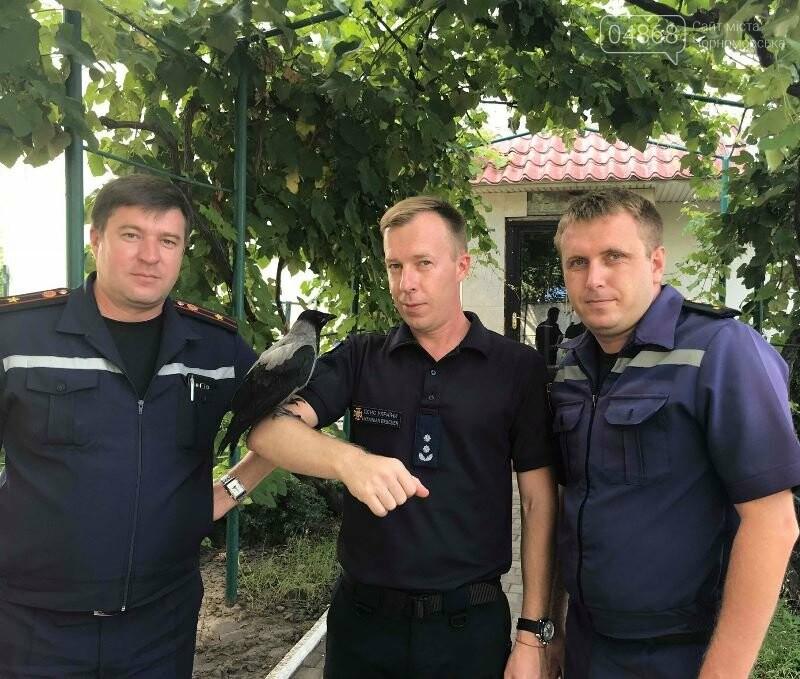 Новости нашего городка: в спасательной службе Черноморска появился новый сотрудник – ворон, фото-11