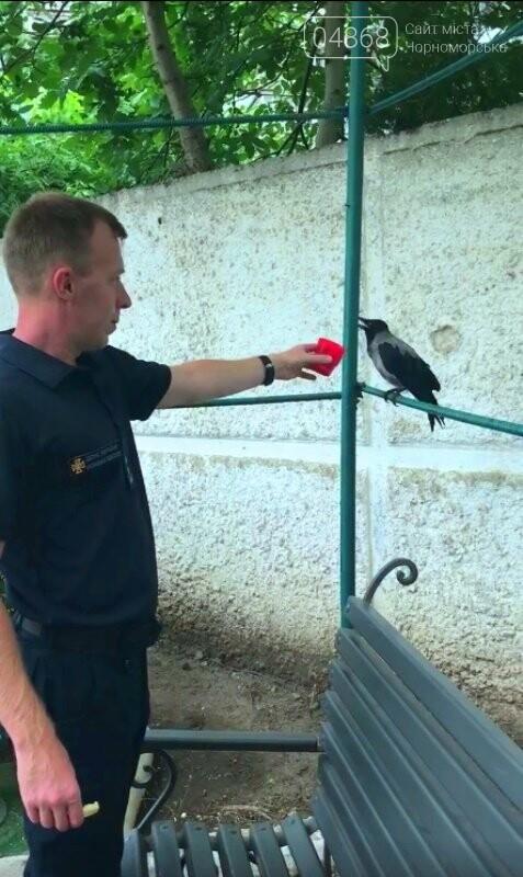 Новости нашего городка: в спасательной службе Черноморска появился новый сотрудник – ворон, фото-8