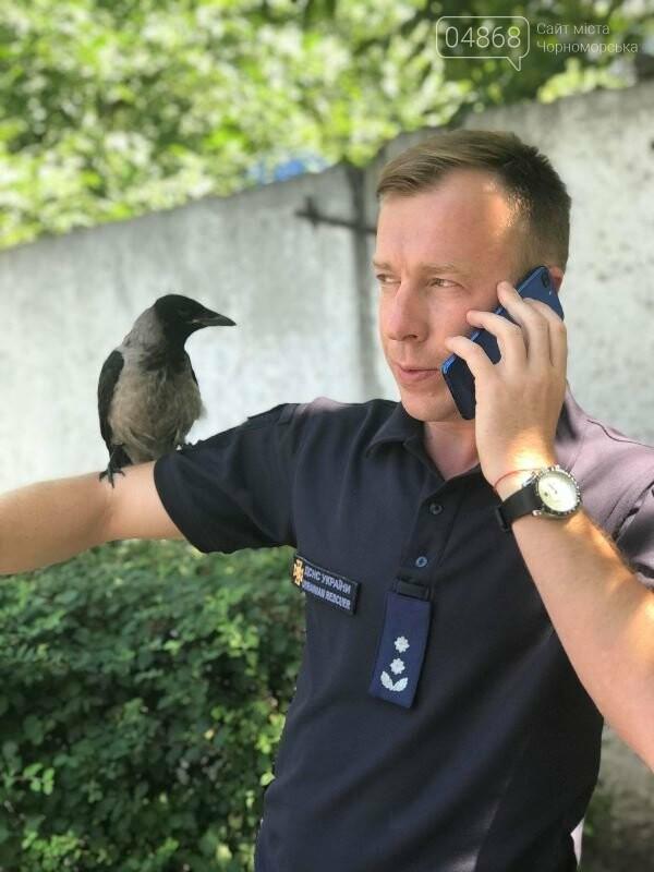 Новости нашего городка: в спасательной службе Черноморска появился новый сотрудник – ворон, фото-4