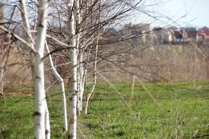 После сессии городского совета Черноморска село Малодолинское наконец обретёт свой день рождения , фото-4