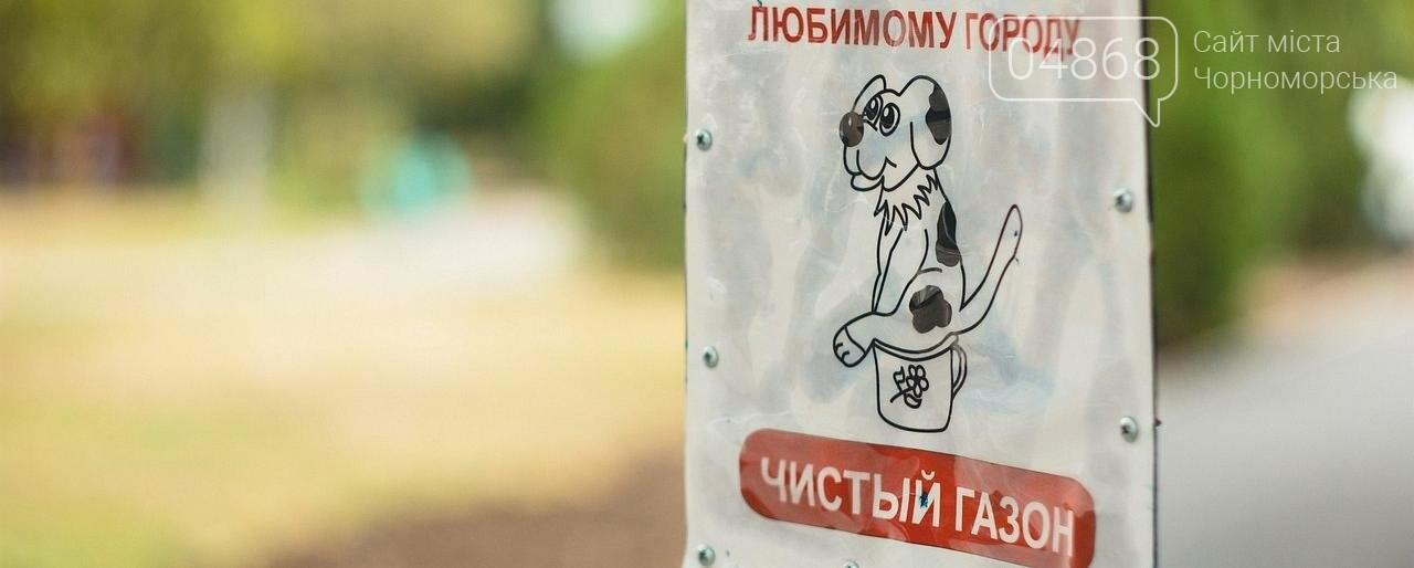 Ошейник, поводок и намордник: разработаны правила содержания домашних животных в Черноморске, фото-5