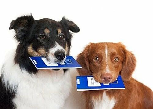 Ошейник, поводок и намордник: разработаны правила содержания домашних животных в Черноморске, фото-3