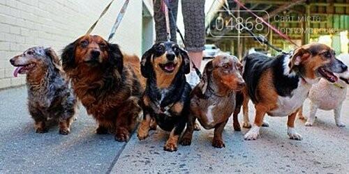 Ошейник, поводок и намордник: разработаны правила содержания домашних животных в Черноморске, фото-4