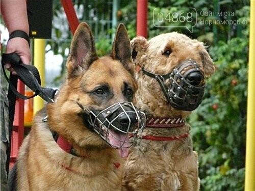 Ошейник, поводок и намордник: разработаны правила содержания домашних животных в Черноморске, фото-1