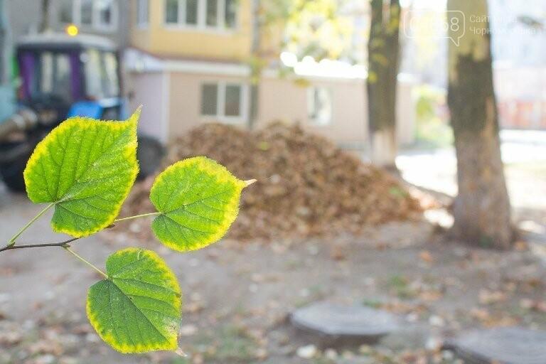 В Черноморске пройдёт осенний субботник, фото-1