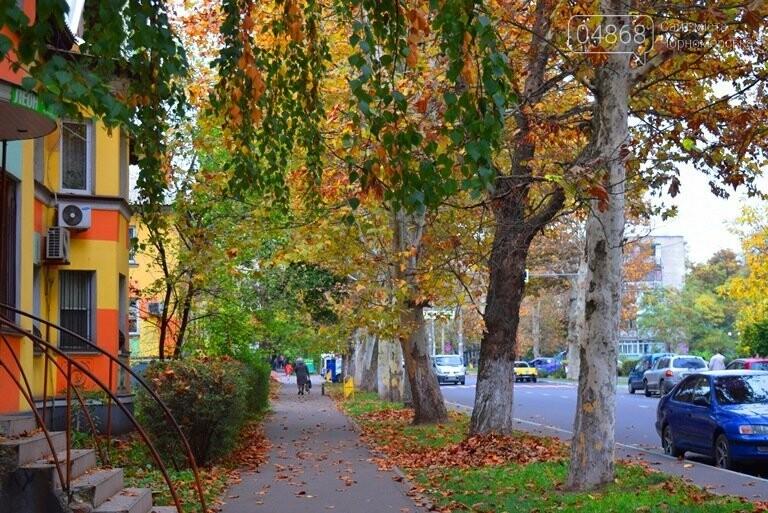 «Листья жёлтые над городом»: специалисты Экоцентра Черноморска рассказали, нужно ли убирать опавшую листву, фото-1