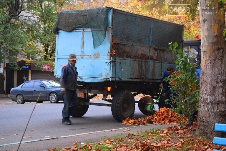 «Листья жёлтые над городом»: специалисты Экоцентра Черноморска рассказали, нужно ли убирать опавшую листву, фото-5