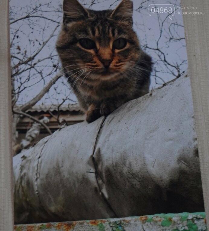 В Черноморске подвели итоги фотоконкурса «Мой пушистый друг», фото-3