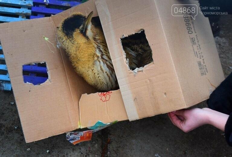 В Черноморске спасли птицу, занесённую в «Красную книгу» (видео), фото-1