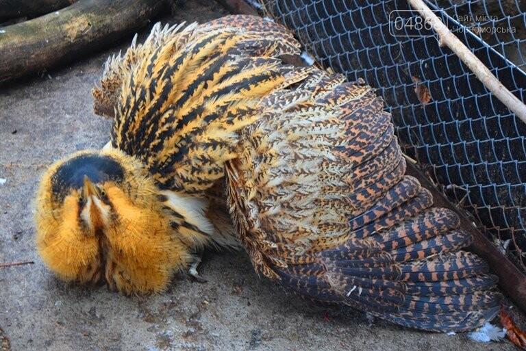 В Черноморске спасли птицу, занесённую в «Красную книгу» (видео), фото-3