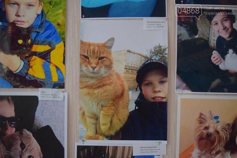 В Черноморске подвели итоги фотоконкурса «Мой пушистый друг», фото-9