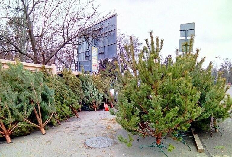 В Черноморске открылись первые «ёлочные базары», фото-1