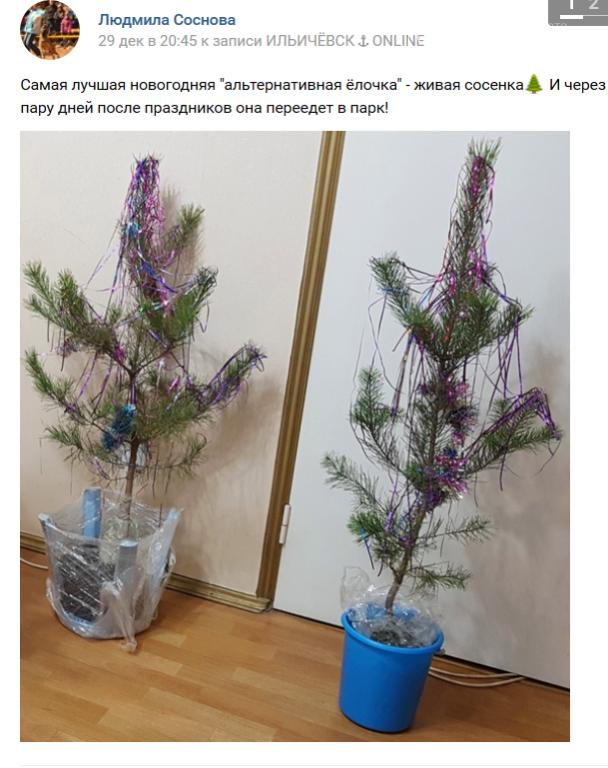 Живая или искусственная: какую ёлку выбрали жители Черноморска?, фото-10