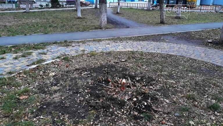 Живая или искусственная: какую ёлку выбрали жители Черноморска?, фото-3