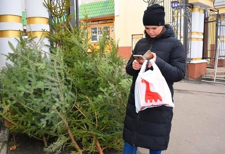 Живая или искусственная: какую ёлку выбрали жители Черноморска?, фото-13
