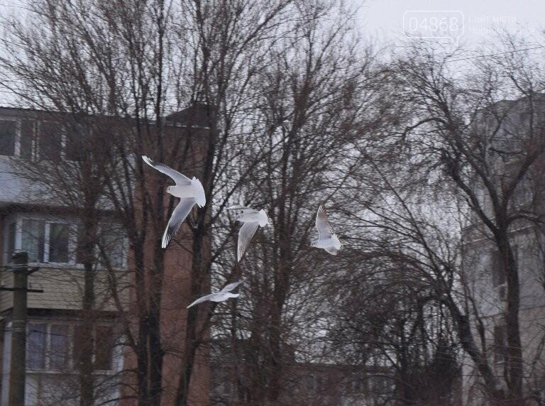 Январская стужа: в жилых кварталах Черноморска всё чаще можно увидеть чаек, фото-8