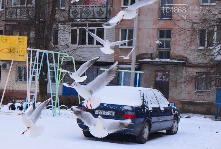Январская стужа: в жилых кварталах Черноморска всё чаще можно увидеть чаек, фото-1