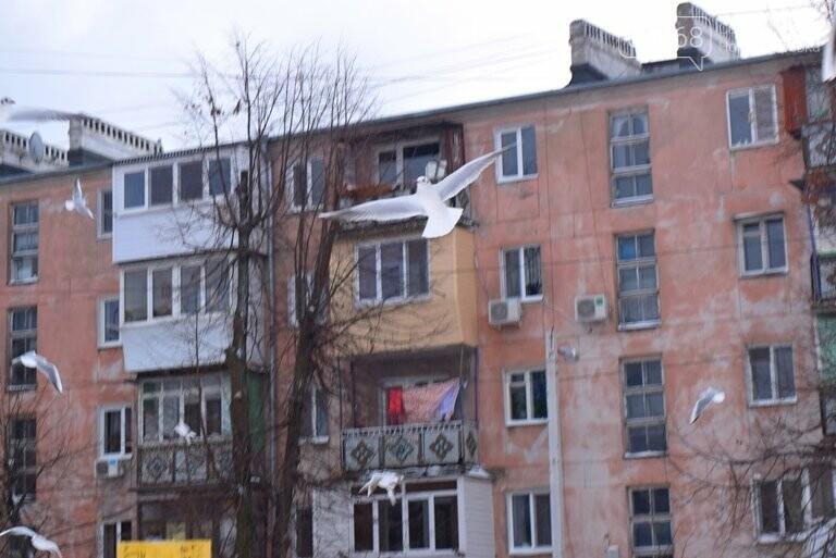 Январская стужа: в жилых кварталах Черноморска всё чаще можно увидеть чаек, фото-2