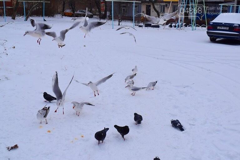 Январская стужа: в жилых кварталах Черноморска всё чаще можно увидеть чаек, фото-7