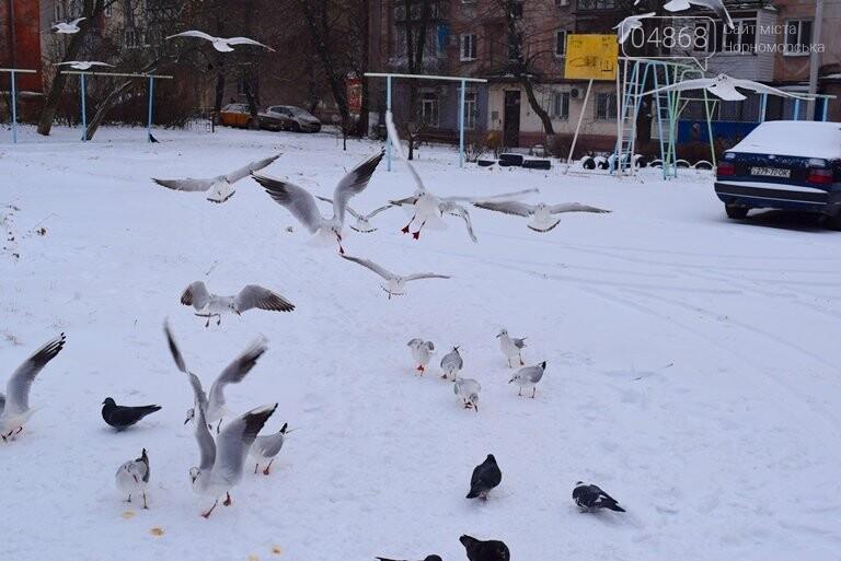Январская стужа: в жилых кварталах Черноморска всё чаще можно увидеть чаек, фото-3