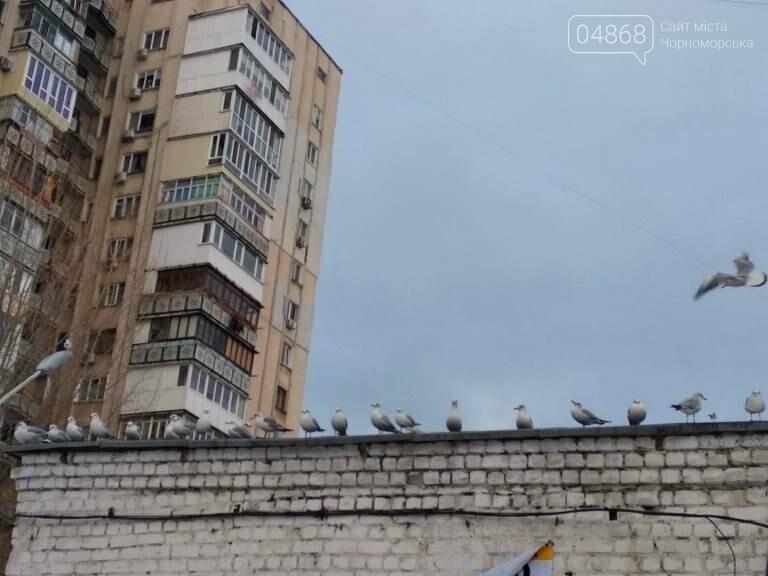 Январская стужа: в жилых кварталах Черноморска всё чаще можно увидеть чаек, фото-6