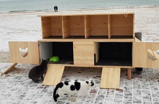 Фотофакт: в Черноморске строят уютные домики для кошек, фото-1