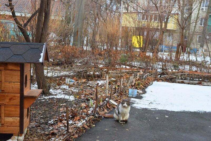 Фотофакт: в Черноморске строят уютные домики для кошек, фото-7