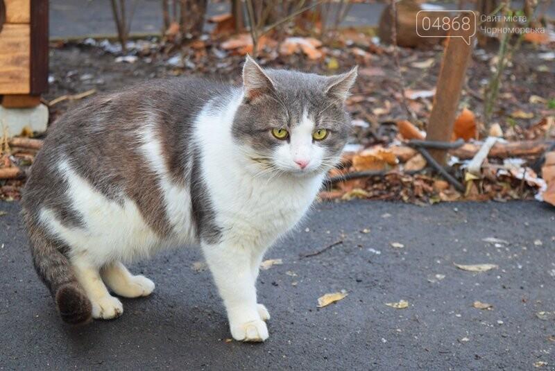 Фотофакт: в Черноморске строят уютные домики для кошек, фото-9