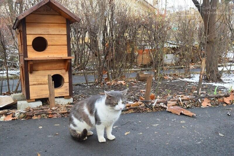 Фотофакт: в Черноморске строят уютные домики для кошек, фото-4