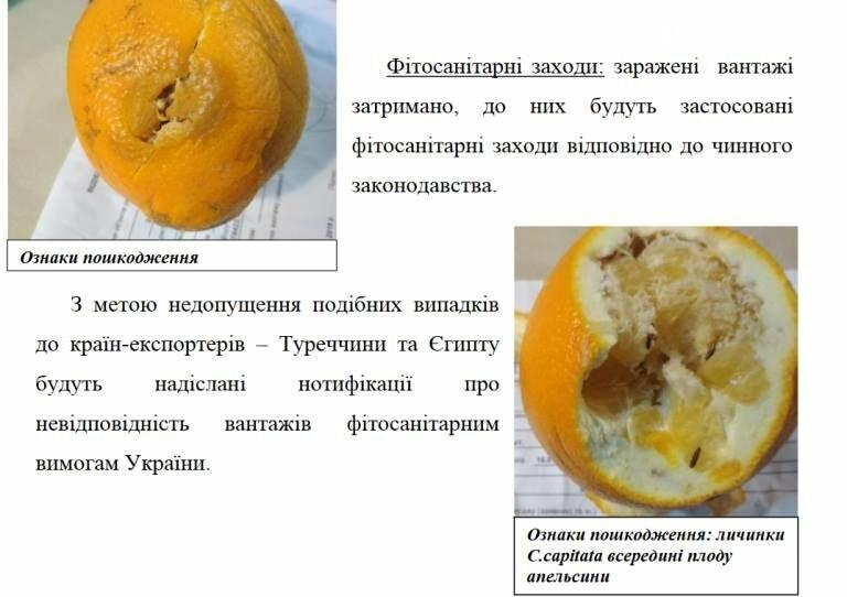 Мандарины с мухами не попадут на прилавки: в МТП «Черноморск» не пропустили опасный груз, фото-2