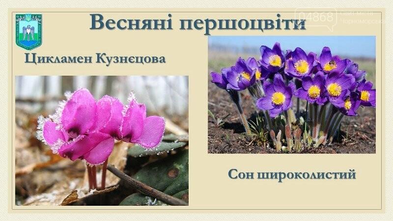 Весна: за что жители Черноморска могут получить штрафы?, фото-8