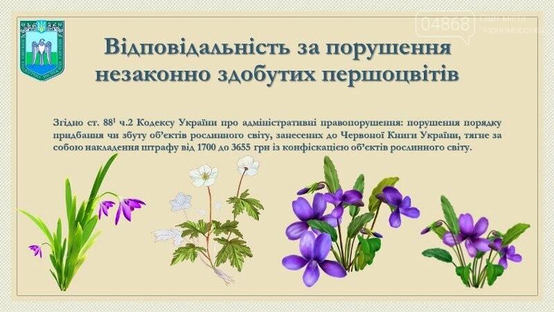 Весна: за что жители Черноморска могут получить штрафы?, фото-10
