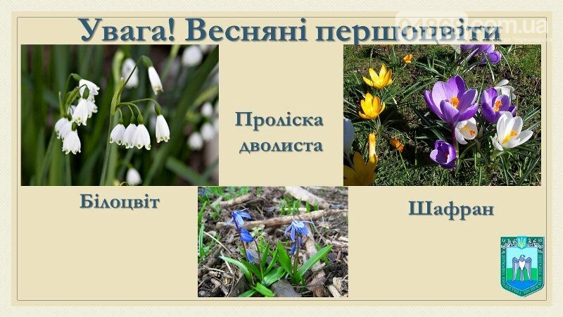 Весна: за что жители Черноморска могут получить штрафы?, фото-9