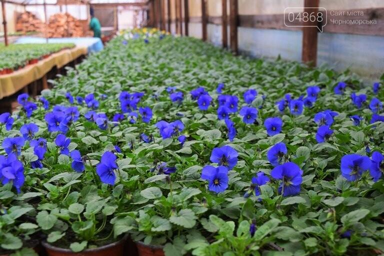 В теплицах черноморского «Зеленхоза» бушует весна , фото-1