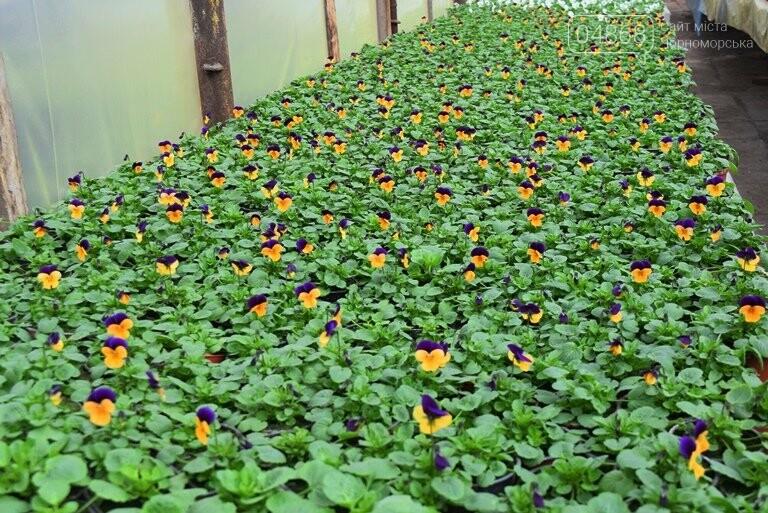 В теплицах черноморского «Зеленхоза» бушует весна , фото-9