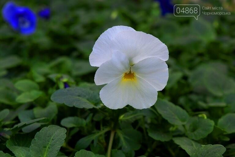 В теплицах черноморского «Зеленхоза» бушует весна , фото-12