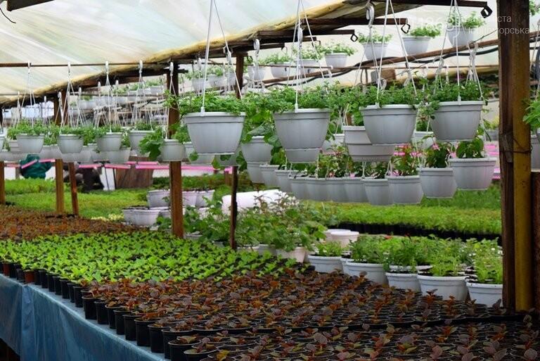 В теплицах черноморского «Зеленхоза» бушует весна , фото-13