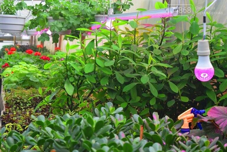 В теплицах черноморского «Зеленхоза» бушует весна , фото-8