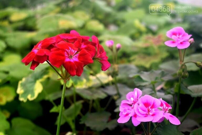 В теплицах черноморского «Зеленхоза» бушует весна , фото-15